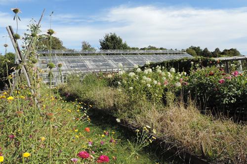 Rosendals Trädgård biodynamic farm