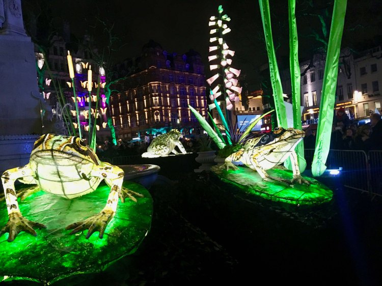 Frogs, part of NIGHTLIFE by Lantern Company with Jo Pocock