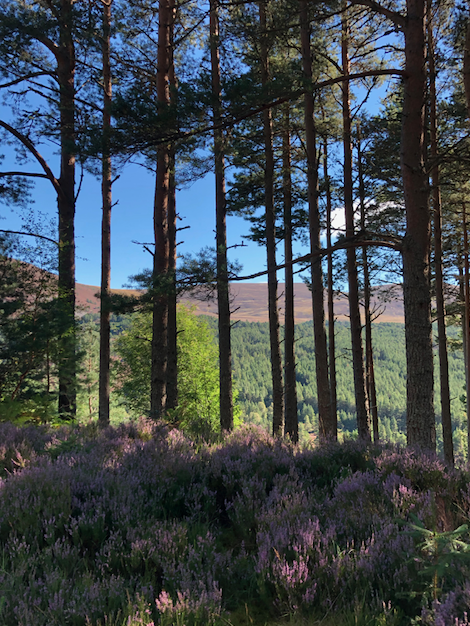 Trees and heather