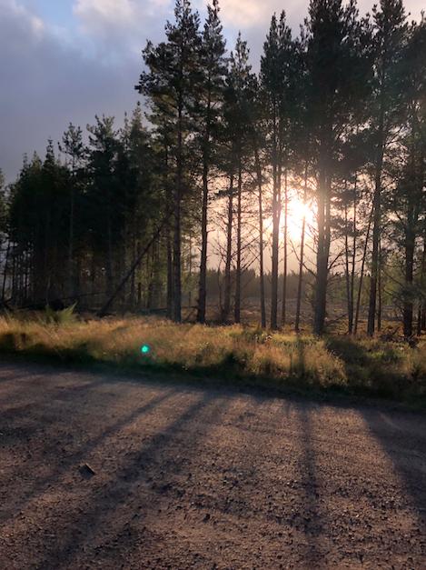 Trees near the edge of Loch Morlich