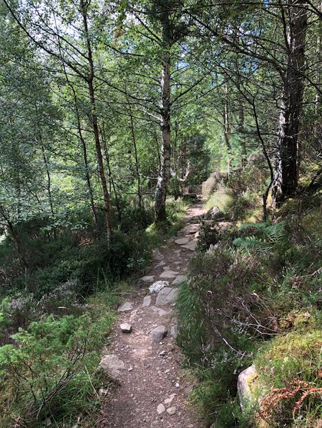 Rocks on the path ahead
