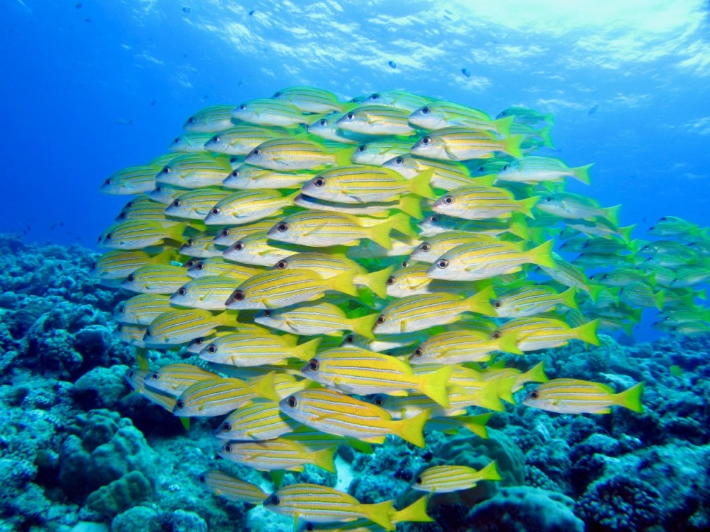 Fish underwater in the waters around Palau