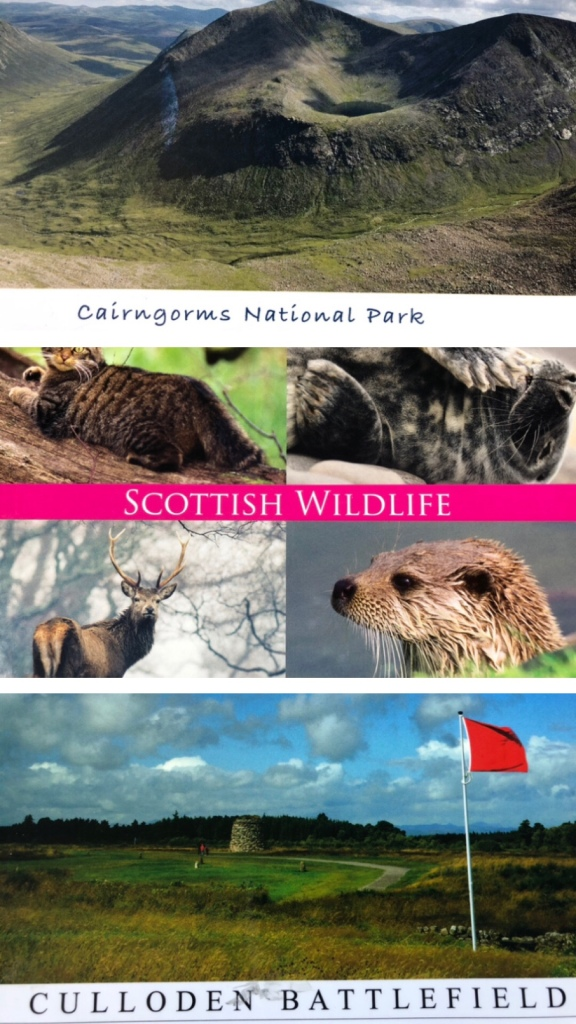 A selection of postcards from Cairngorms, Culloden and surrounds.